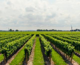 Rode wijn gezond: is dat echt zo?