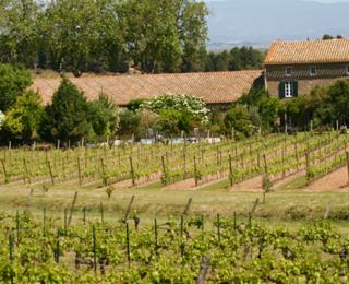 Luc Pirlet maakt al 20 jaar uitstekende wijnen in de Languedoc!