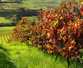 Portugese wijnen: wijndomein Pinta do Quinto